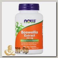 Boswellia Extract 250 мг